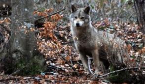 Al Nizzola di Trezzo porte aperte a lupi e cultura