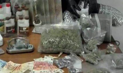 Arrestati quattro carugatesi: colti sul fatto mentre confezionavano droga