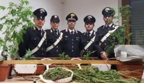 Capriate, coltivava marijuana in casa, arrestato