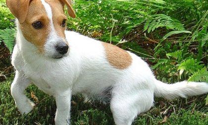 Frontale tra auto, il cane fugge terrorizzato e scompare