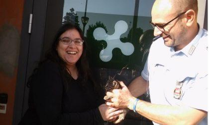 La Locale di Trezzo salva un gattino