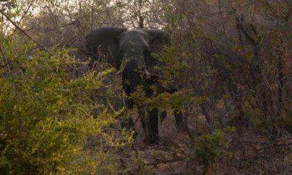 Pozzo: safari con il brivido,caricato da un elefante