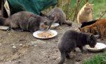 Gatti di strada raccolti cento chili di cibo
