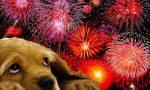 Qualche regola per evitare un capodanno da cani