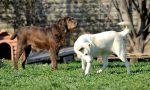 Deiezioni canine vicino alle tombe il Comune ammonisce i proprietari di animali