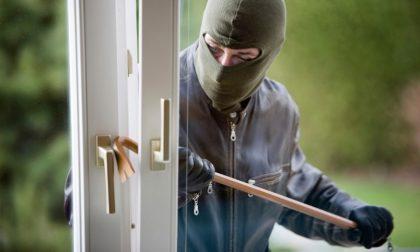 Alza la tapparella e si trova davanti un ladro