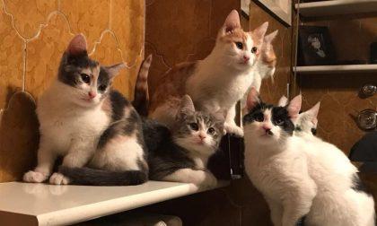 Mamma gatta e sei cuccioli salvati dall'assessore