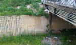 Cane lanciato da cavalcavia Vivo per miracolo FOTO