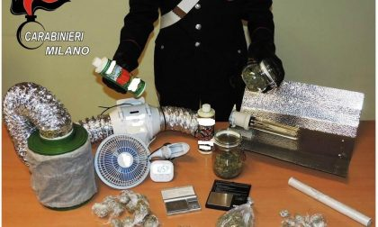 Coltiva marijuana in taverna arrestato