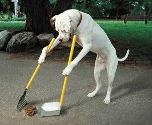 Pittogrammi in strada per esortare la raccolta delle deiezioni canine