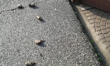 "Deiezioni canine davanti a casa: ""E' una vergogna"""