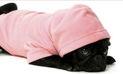 Come proteggere gli animali dal freddo e dal temuto Buran
