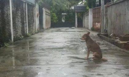 Lascia il cane legato sotto la pioggia, padrone denunciato per maltrattamenti
