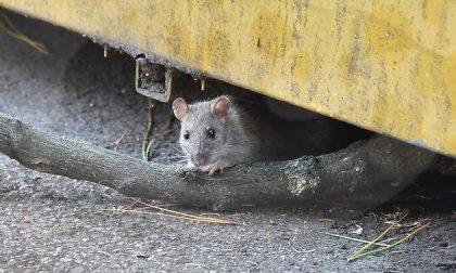 Ci sono i topi, chiude la scuola materna