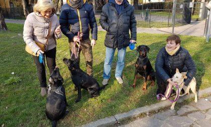 «Cerchiamo un'area cani», e la petizione a Trezzo diventa virale