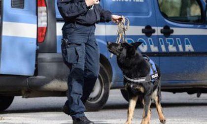 """Cani antidroga della Polizia nei bar della """"movida"""""""