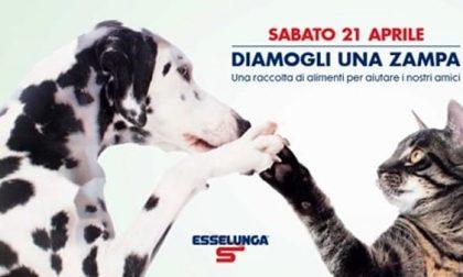 """""""Diamogli una zampa"""": Esselunga aiuta gli animali"""