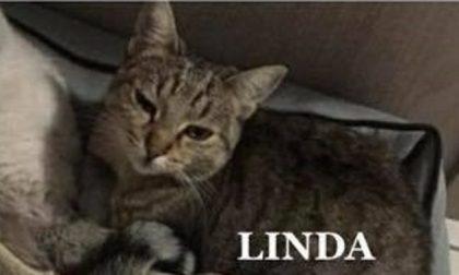 Esplosione Rescaldina: dopo il cane, a distanza di un mese salvata anche una gattina