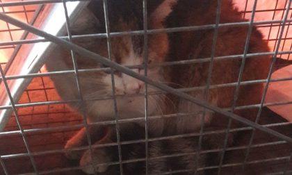 Gattina smarrita in un'azienda abbandonata: salvata FOTO