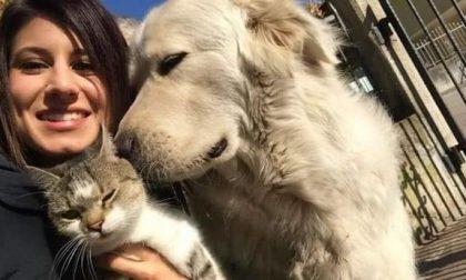 Free Miro, l'On Brambilla in campo per il cane sequestrato perché abbaia troppo