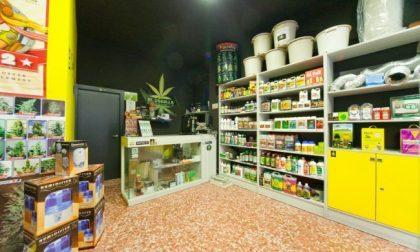 Cannabis light, in Svizzera la compri nei supermercati Lidl
