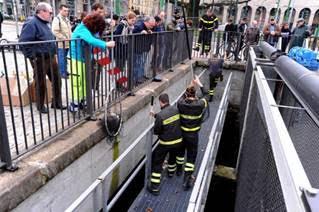 Pompieri salvano 12 anatroccoli in Darsena