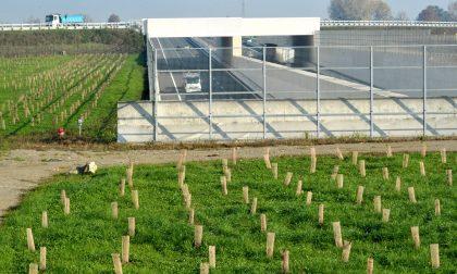Un giardino pensile sopra la galleria autostradale