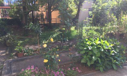 Una 80enne di Cernusco ha creato un giardino nel parchetto degradato