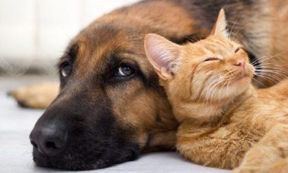 Boom di animali domestici, l'agenzia immobiliare crea il certificato pet friendly