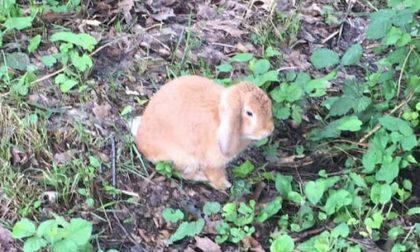 Coniglio abbandonato al parco, l'appello per metterlo in salvo