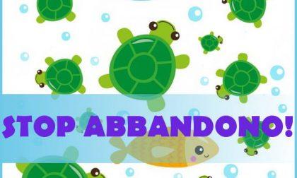 Il Comune: stop all'abbandono delle tartarughe