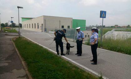 Trezzano Rosa e Pozzo Polizia Locale e cani antidroga alle medie