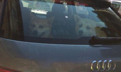 Cani abbandonati in auto e salvati dall'Enpa