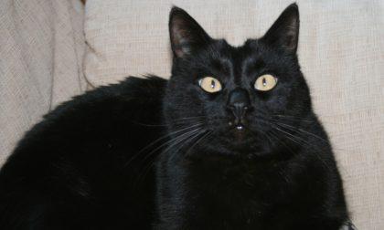 Casa allagata, a dare l'allarme è... il gatto