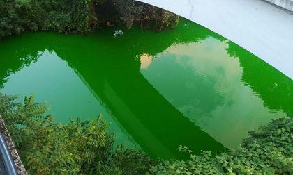 Il Lambro stamattina è... verde