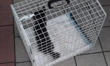 Gattino incastrato nel motore liberato dopo cinque ore