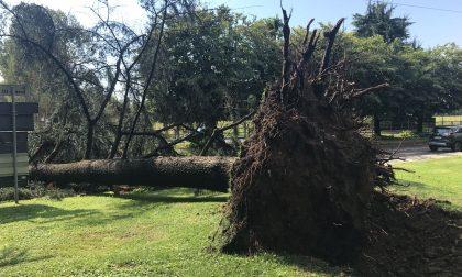 Tombe danneggiate dagli alberi caduti: il Comune paga i danni