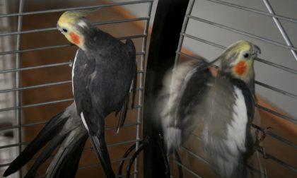 Uccelli maltrattati e abbandonati