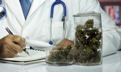 Cannabis terapeutica, Lombardia dà il via a cure gratuite
