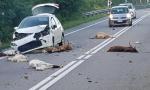 Strage di animali sulla Statale, incredibile incidente a Turbigo