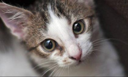 Cancellata la maxi multa alle gattare fatta da Ats