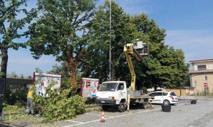 Potatura alberi nel parcheggio della scuola media