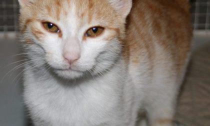 Gattino abbandonato in autostrada cerca casa