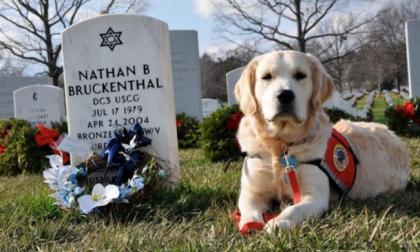 Cani al cimitero? Da oggi si può