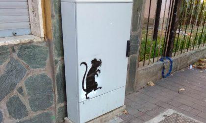 Mistero al Satellite sui muri compaiono dei ratti