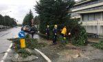 Pioggia torrenziale crolla un albero in strada