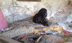 Ancora un sequestro di un animale alla Cascinazza: Little John salvato dai volontari