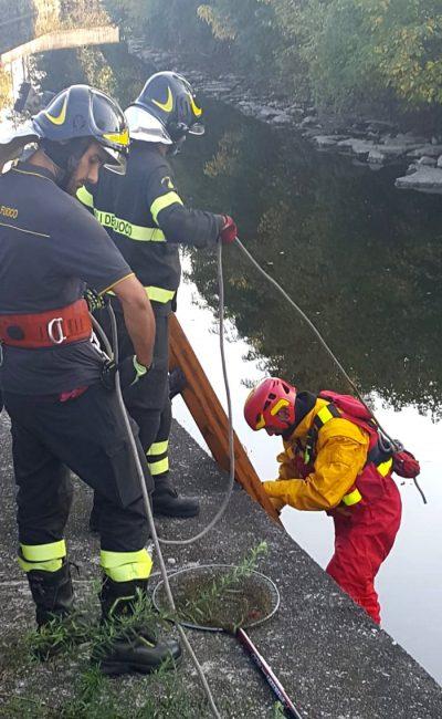 Soccorso airone cinerino sul Lambro, muore nonostante gli sforzi FOTO