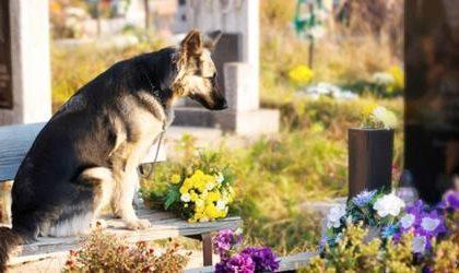 Cani seppelliti con i padroni, Regione approva legge
