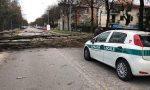 Il vento abbatte un albero, strada chiusa a Peschiera
